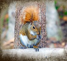 Squirrel with a very red Tail. by imagetj