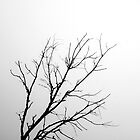 Ghost Tree by Maren Misner