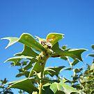 Bee On Mistletoe #2 by Chanzz
