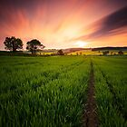 Summers Evening by Squance