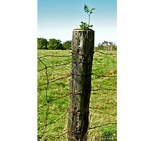Birth of a Fencepost III Photographic Print