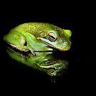 Frog by Savannah Gibbs