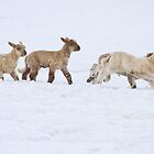 Snow Play by Kimball Chen