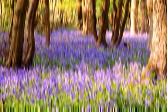 Blurbell Woods by JEZ22