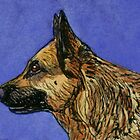 German Shepherd by Brenda Scott