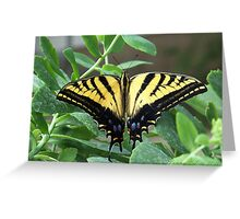 Tigertail Swallowtail Butterfly ~2~ Greeting Card
