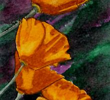 California Poppies by Brenda Scott