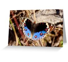 The Blue Pansy for Dreamflower Greeting Card