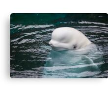 The Beluga Canvas Print