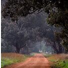 Mist in the Morning by julie anne  grattan