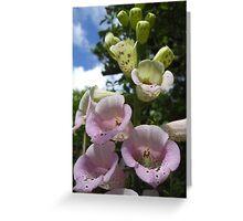 Foxglove - Surrey Greeting Card