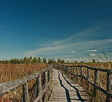 The Boardwalk by Mike Oxley