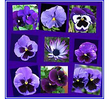 All Blues - Summer Flowers Collage Photographic Print