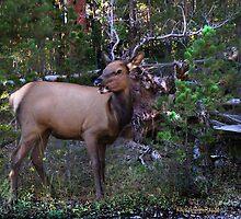 Like My Antlers? by Kay Kempton Raade