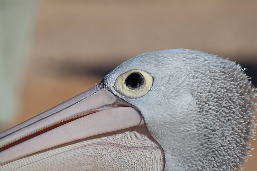 Pelican eye am. by Michelle Jonker