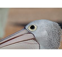Pelican eye am. Photographic Print