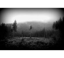 Lone Bark Photographic Print