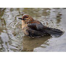 Uncommon / Rusty Blackbird Photographic Print
