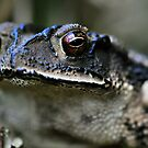 Portrait of a Toad by Dennis Stewart