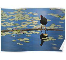 Mr Bird Poster