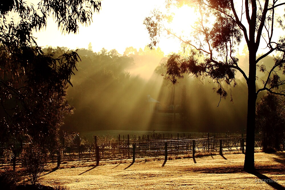 Vinyard - Hunter Valley by kerenmc