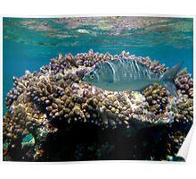 Reef Swimming Poster