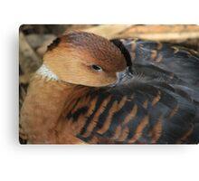 Feeling Ducky Canvas Print