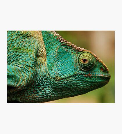 karma chameleon? Photographic Print