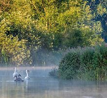Swans in the Mist by James  Key
