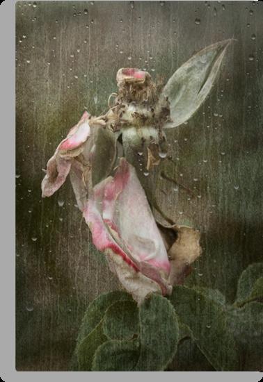 Rust 'n Roses ~ No 19 by Rosalie Dale