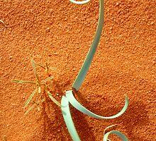 desert ideogram by yvesrossetti