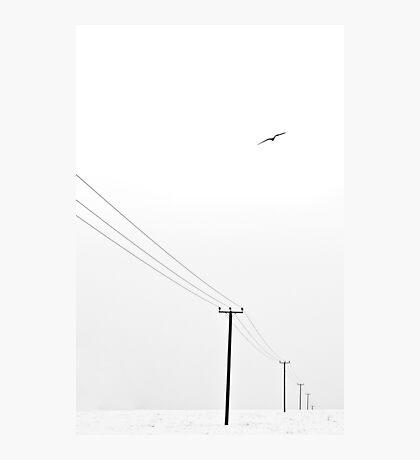Free as a Bird Photographic Print