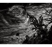 Kissed by the ghosts of the living.  Photographic Print