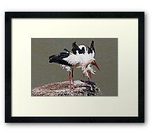 Bill-clattering  Framed Print