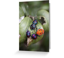 Bug Meeting Greeting Card