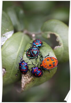 Bug Meeting by yolanda