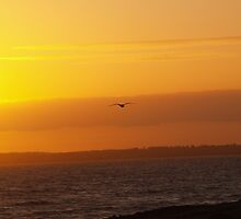 Sunset Seagull - Winchelsea Beach by Dan Bevan Photography