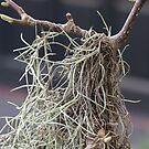 Southern Moss-pitality! by Laney Lane