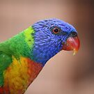 Australian Rainbow Lorikeet by Patricia  Knowles