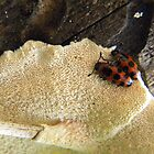 Beetles on Fungus by Helena Bolle