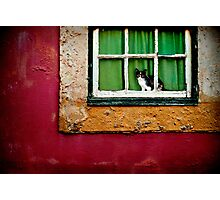 Cat in Lisbon Photographic Print
