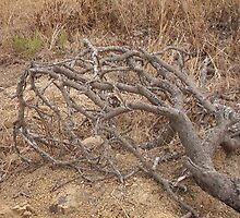 Dead African branches by Captain007