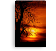 Reaching For The Light. Canvas Print