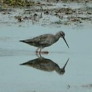 Redshank by Russell Couch