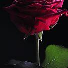 Love by KChisnall