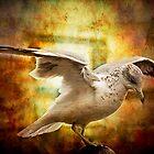 Where are you going, gull? by LudaNayvelt