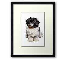 Cute Black And White Havanese Dog Painting Framed Print