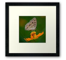Butterfly and The Yellow Flower Framed Print