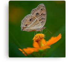 Butterfly and The Yellow Flower Canvas Print