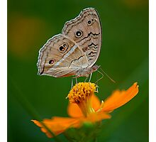 Butterfly and The Yellow Flower Photographic Print